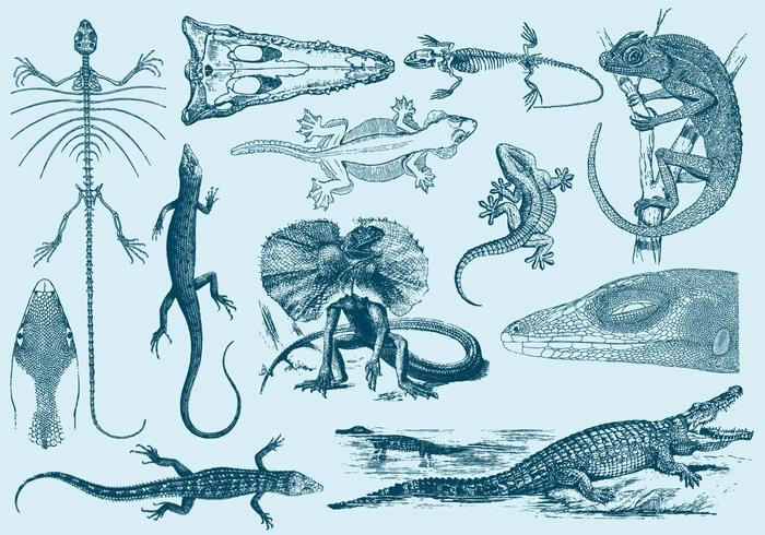 Vintage Lizard Ilustraciones