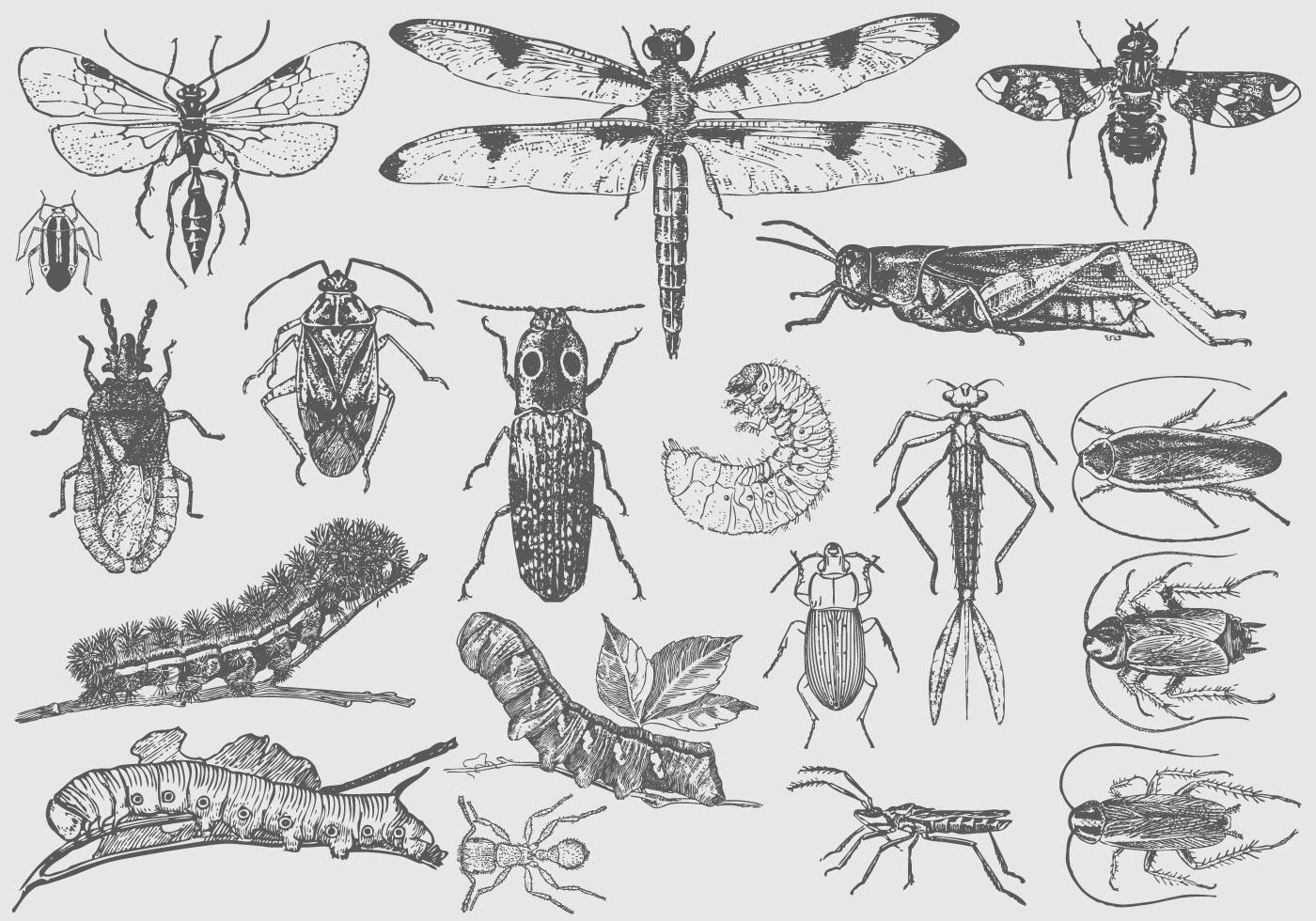 Insectos del insecto del vintage - Descargue Gráficos y Vectores Gratis