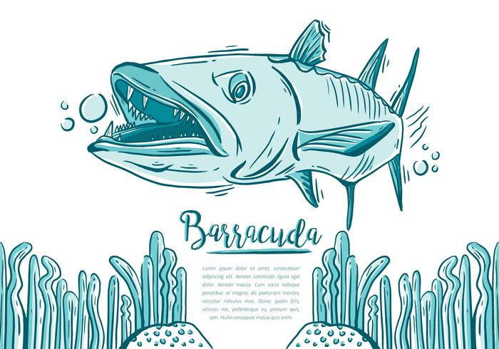 Barracuda libre