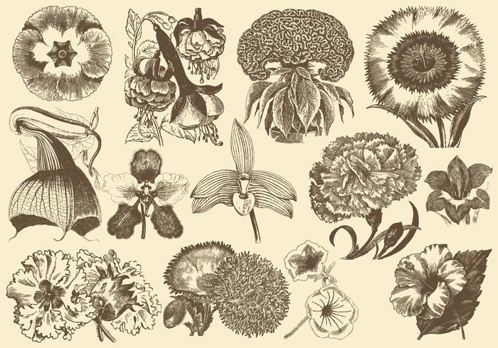 Fleurs exotiques anciennes
