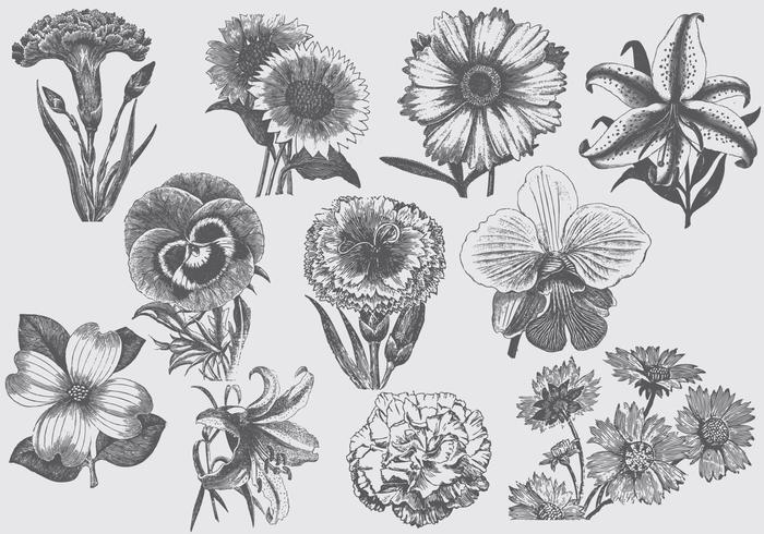 Vintage Blumen - Kostenlose Vektor-Kunst, Archiv-Grafiken & Bilder ...