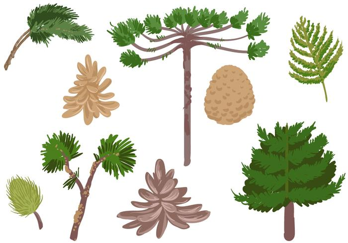 Free Conifer Vectors