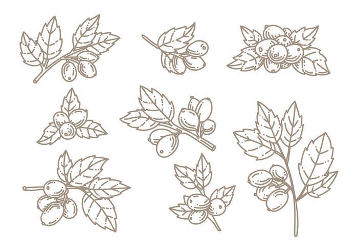 Vector Rosa Doodle