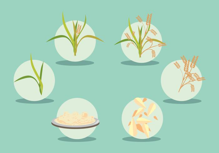 Rice Field Vector Set