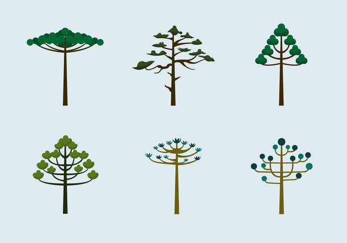 Araucaria árboles vector plana