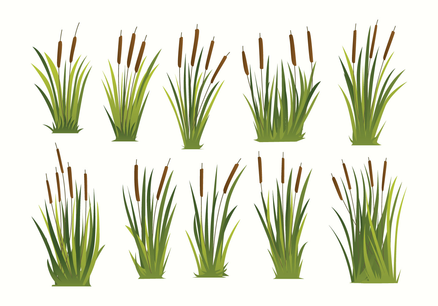 Free Cattails Vector Download Free Vector Art Stock