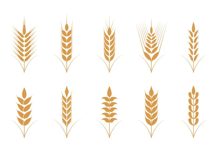 Oats Vector Icons