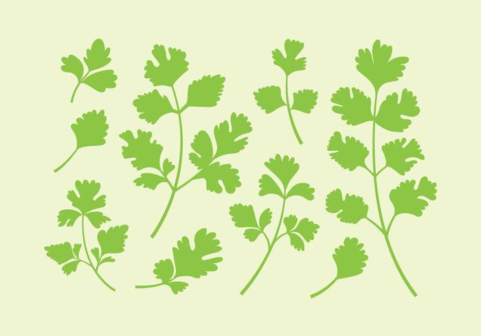Persilja eller cilantrovektorer