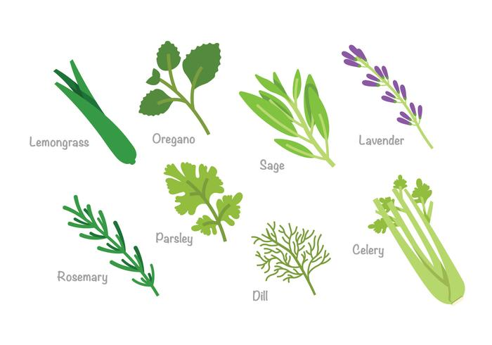 Herb Vector Pack