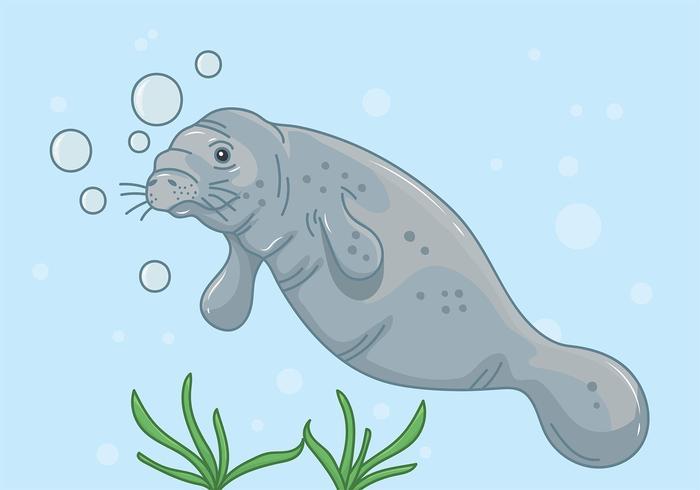 Manatee Onderwater Achtergrond vector