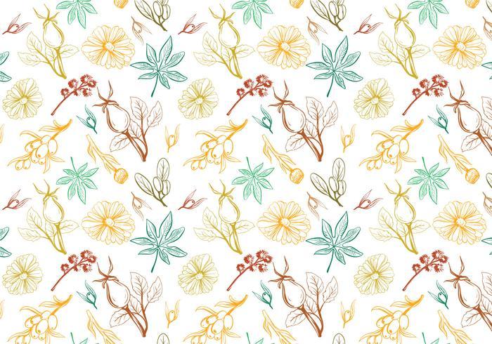 Free herbs Pattern Vectors
