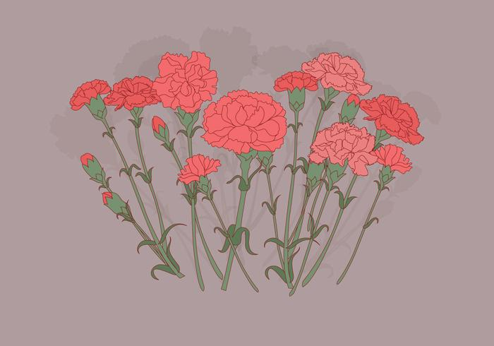 Carnation Flowers Vector