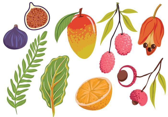 Gratis Exotische Fruit Bladeren Vectoren