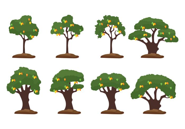 Mango Tree Illustration vector