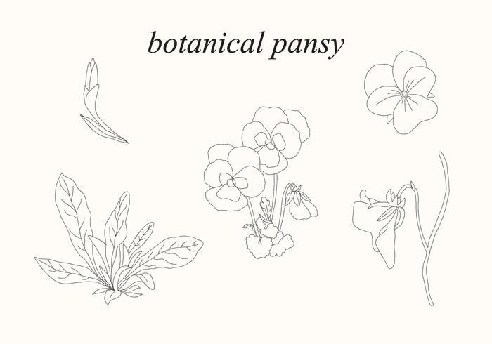 Botanische Stiefmütterchen