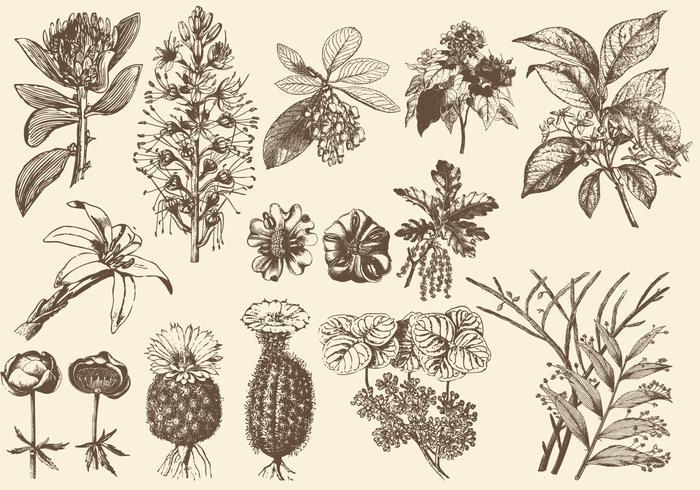 Sepia Exotic Flower Illustrations vector