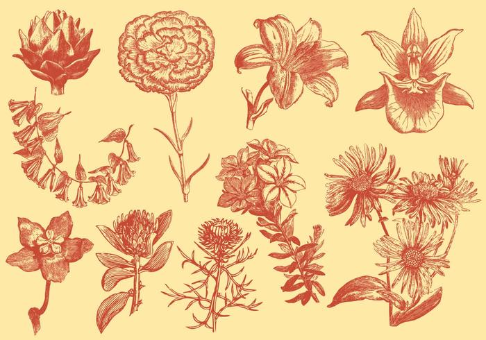 Orange Exotic Flower Illustrations