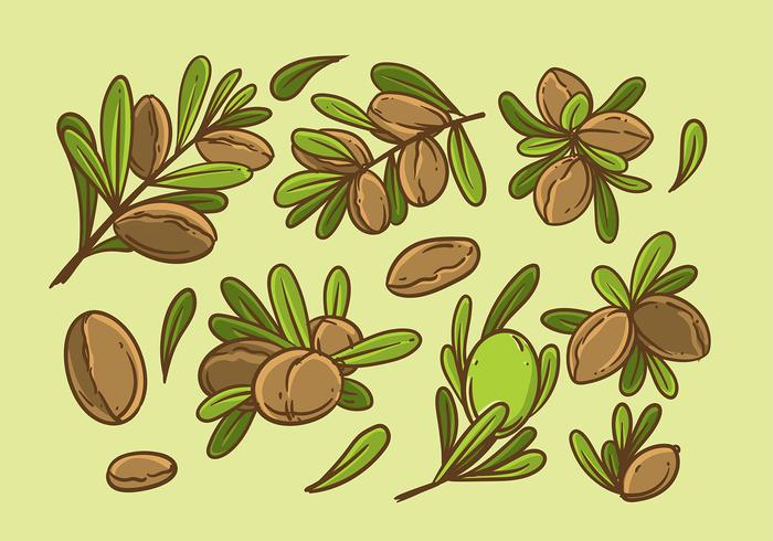 Argan Hand Drawing Vector