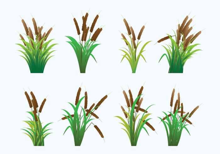 Reeds Icons vector