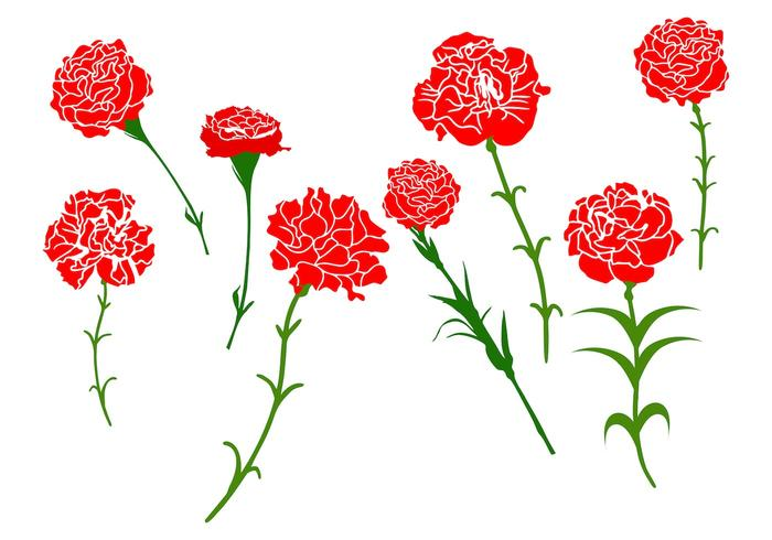 Free Carnation Flower Vector