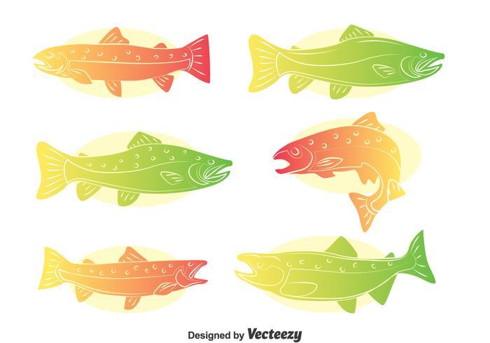 Rainbow Trout Vector Set