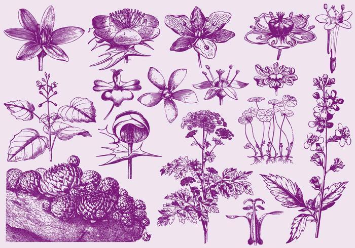 Púrpura Flores exóticas Ilustraciones