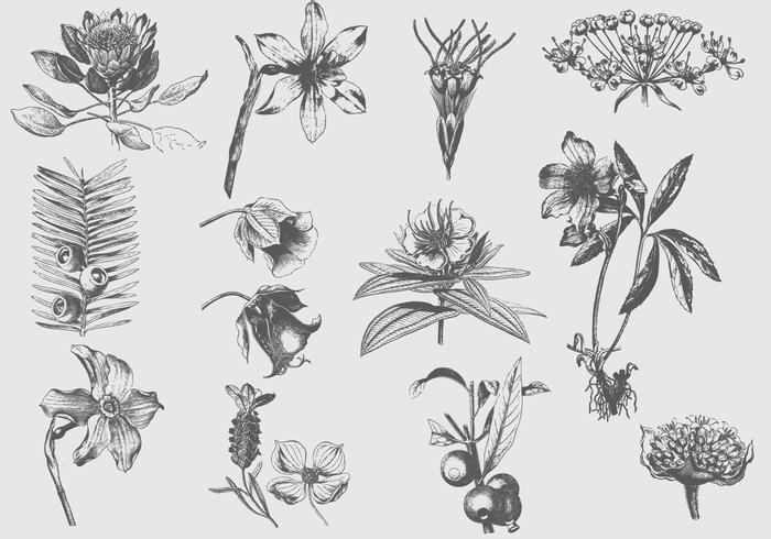 Gray Exotic Flower Illustrations