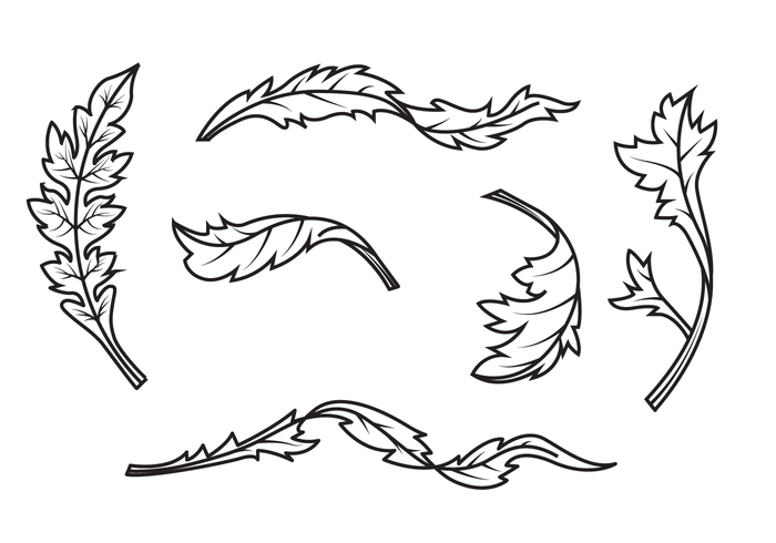 Free Acanthus Vector
