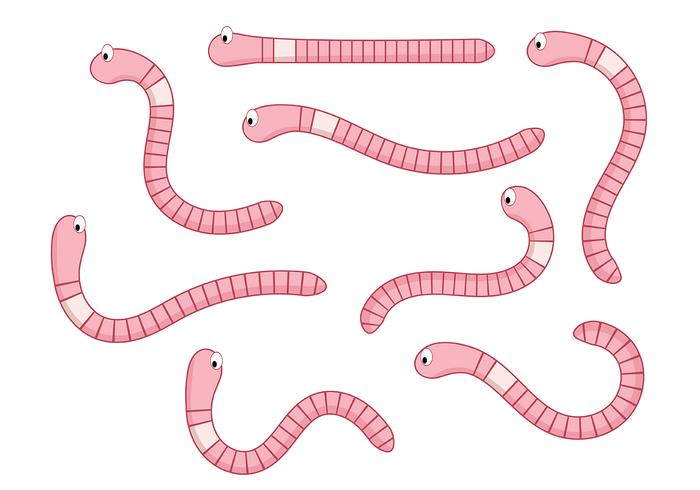 Earthworm Vector 2