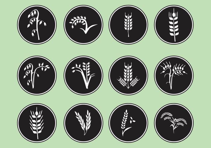 Type de vecteurs de grain