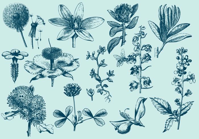 Blaue exotische Blumen-Illustrationen