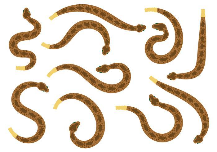 Vettore di serpente a sonagli