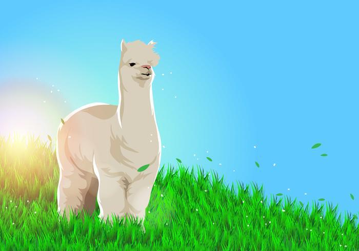 Lama Alpaca Vector de fondo