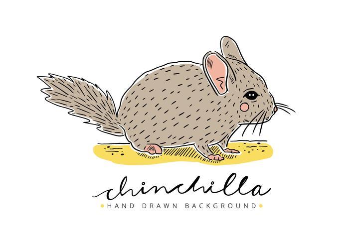 Contexte gratuit Chinchilla