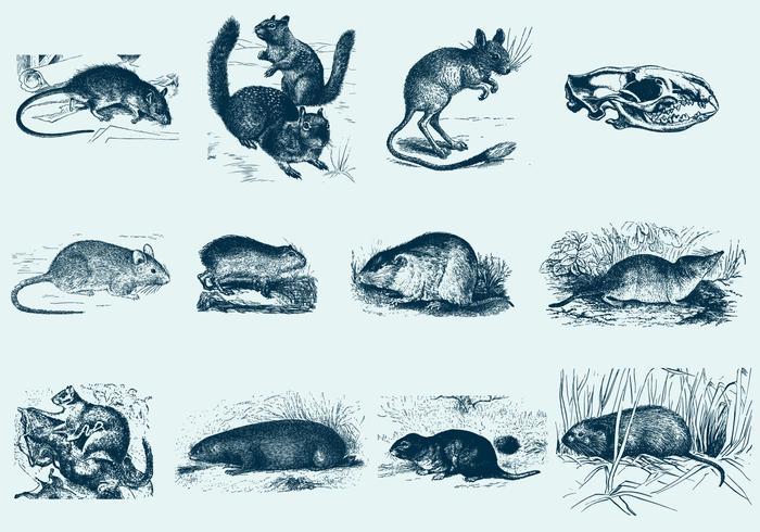 Illustrations de rongeurs bleus