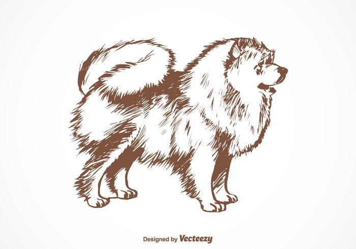 Free Pomeranian Dog Vector Illustration