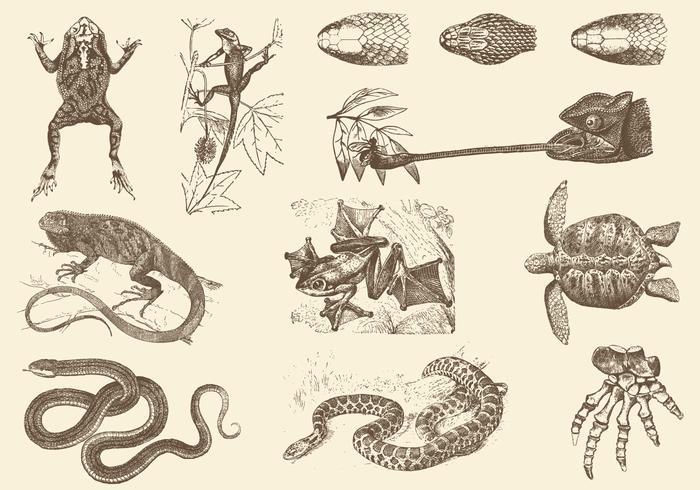 Sepia Reptile Ilustraciones