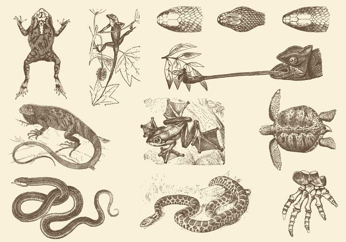 Sepia Reptiel Illustraties