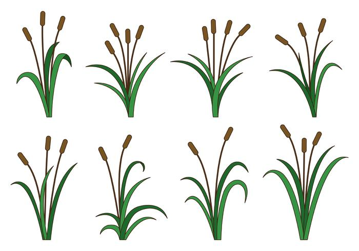 Set Of Cattails Vector