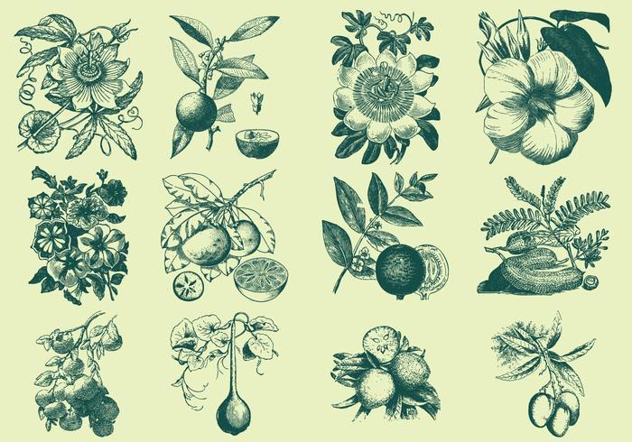 Groene Fruit En Bloem Illustratie