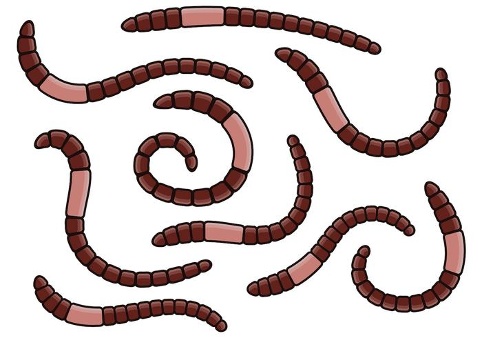 Aardworm Vector