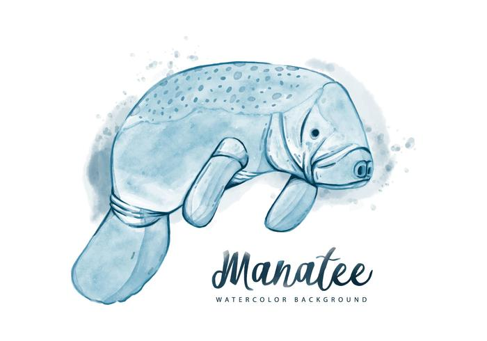 Free Manatee Watercolor Background