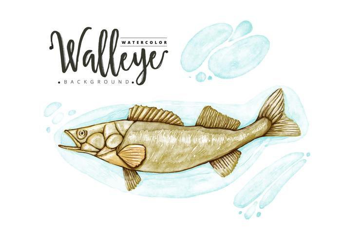 Fond de Walleye gratuit vecteur