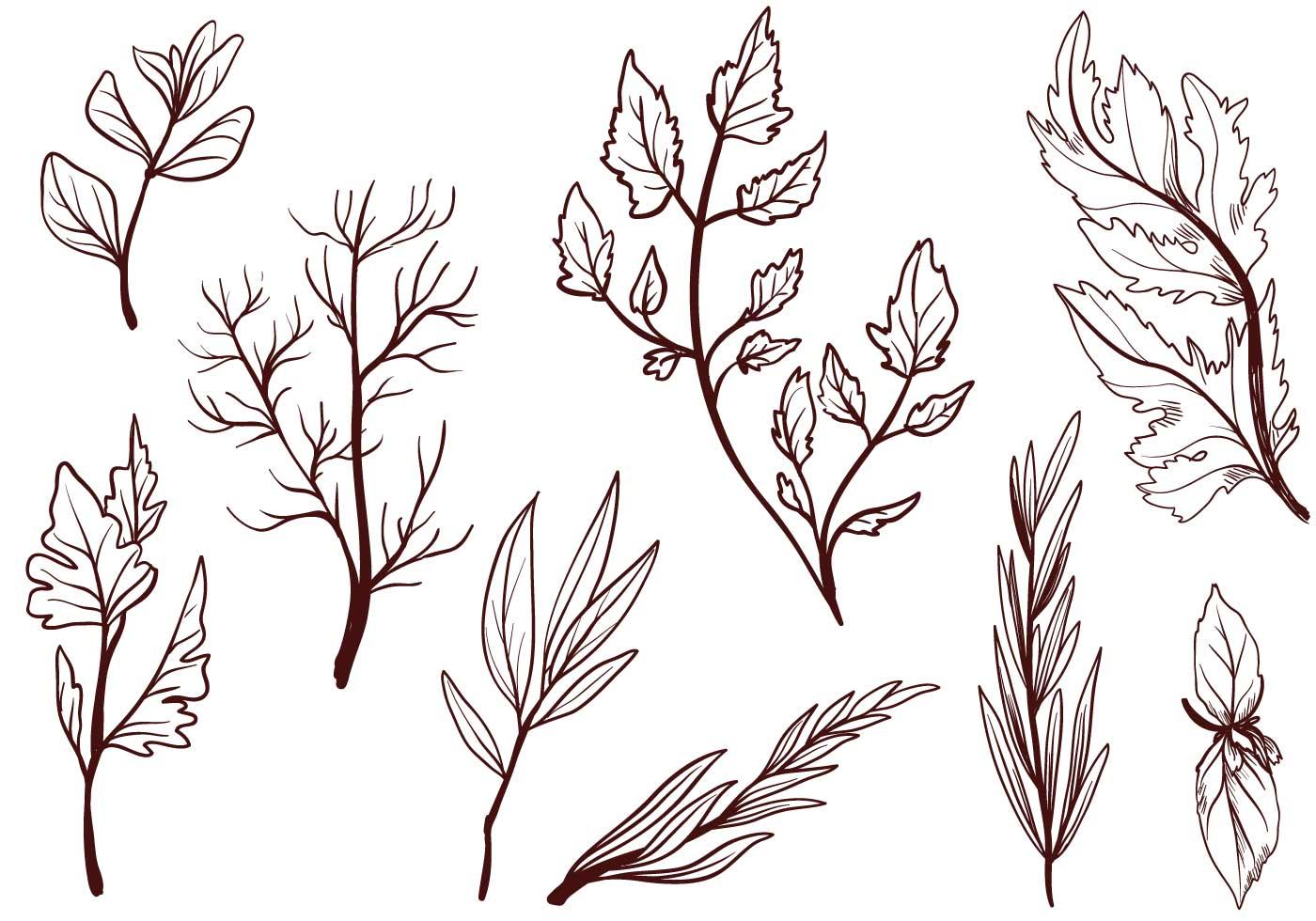 cooking herbs vectors download free vector art stock