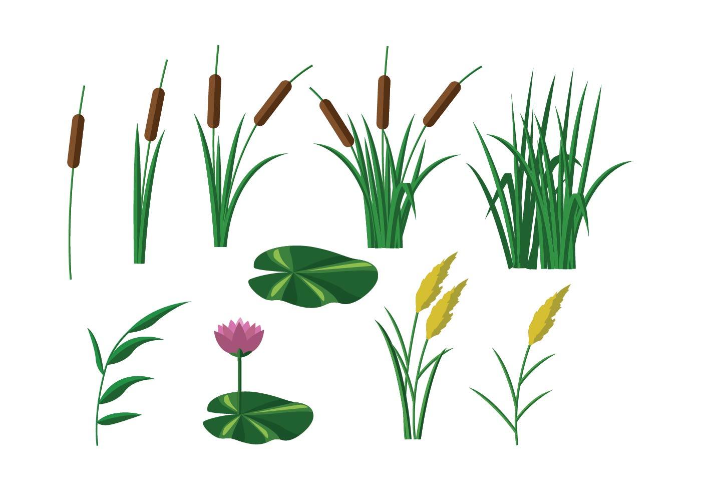 Free Reeds Vector Download Free Vector Art Stock