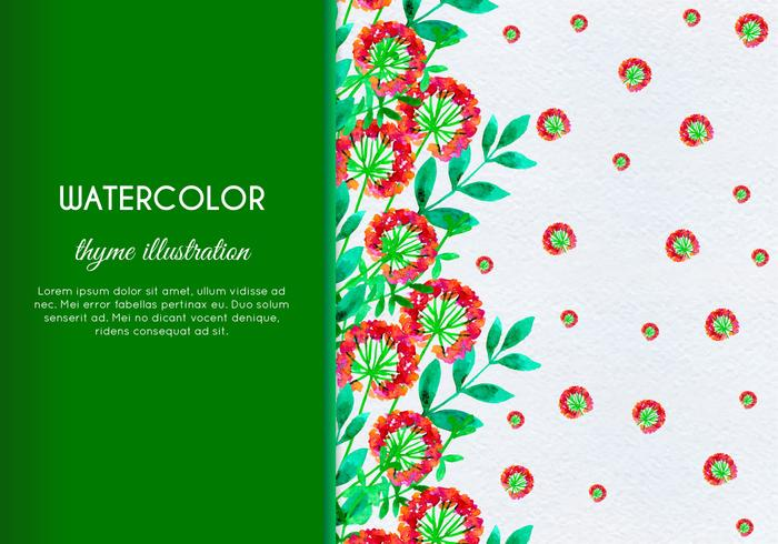 Free Vector Hand Drawn Watercolor Thyme With Flowers And Leaves