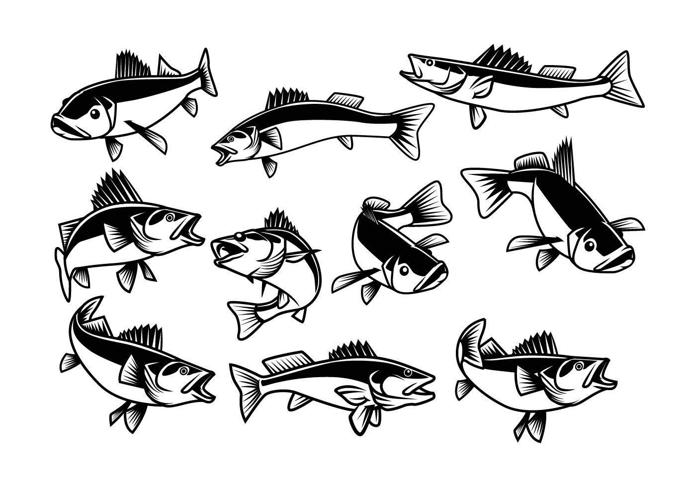 free walleye vector
