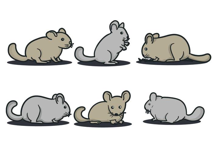 Chinchilla Vector