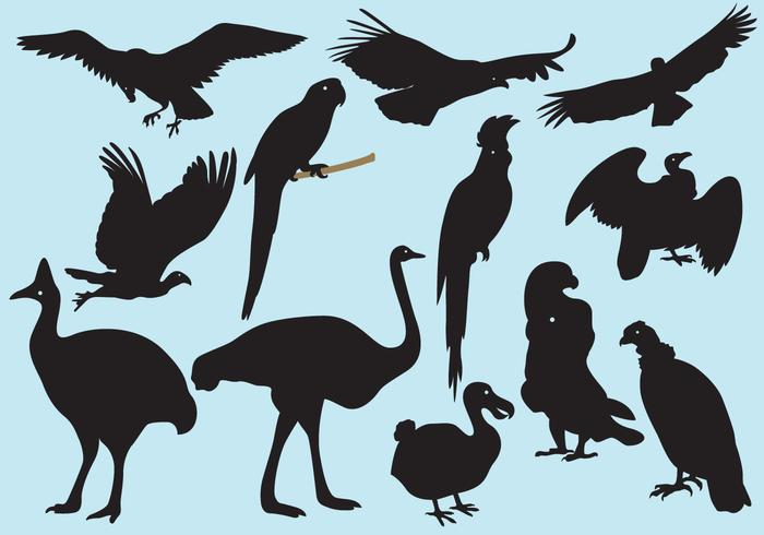 Big Bird Silhouetten