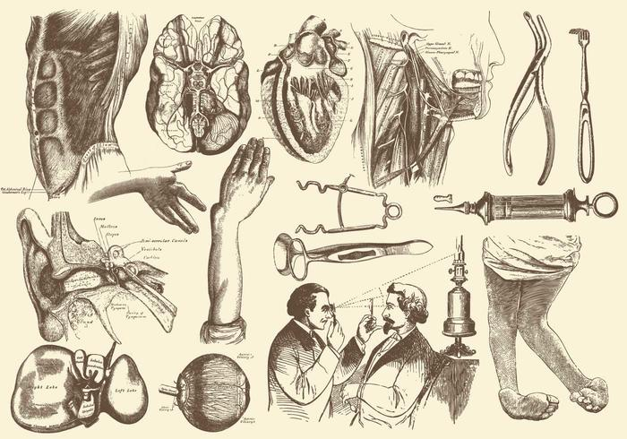 Sepia Anatomy And Health Care Illustrations